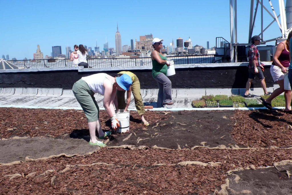 lea-atelier_cubierta-verde-nyc-compost-skyline