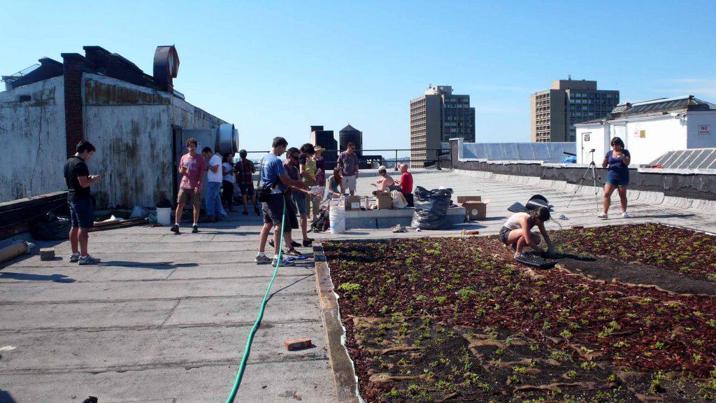 lea-atelier_cubierta-verde-nyc-watering-regando